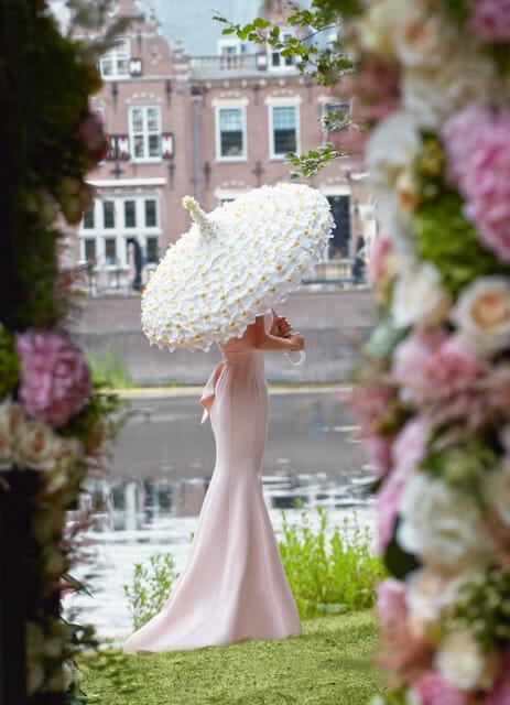 bridal umbrella orchids